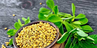 fenugreek in hindi