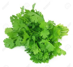 coriander leaves in Hindi