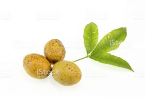 Hog Plum in Hindi