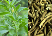 Ashwagandha in hindi